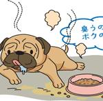 室内犬は臭う?